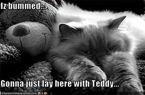 Iz bummed...  Gonna just lay here with Teddy...