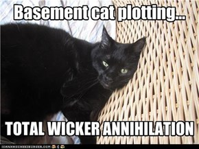 Basement cat plotting...