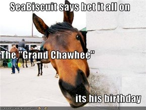 "SeaBiscuit says bet it all on The ""Grand Chawhee""  its his birthday"