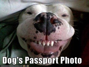 Dog's Passport Photo