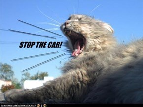 STOP THE CAR!