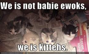 We is not babie ewoks,  we is kittehs.