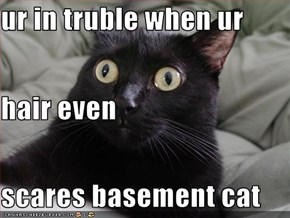 ur in truble when ur  hair even scares basement cat