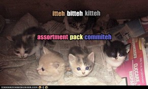 itteh bitteh kitteh assortment pack commiteh
