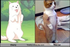 Cherry Totally Looks Like This Cat
