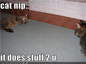 cat nip..  it does stuff 2 u