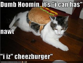 "Dumb Hoomin, it's ""i can has"" nawt ""i iz"" cheezburger"""