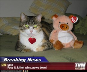 Breaking News - Cute Face it, kitteh wins, paws down