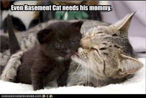 Even Basement Cat needs his mommy.