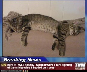 Breaking News - Here at  KCAT Nooz 53  we uncuvverd a rare sighting of the unbleevable 2 headed purr beest