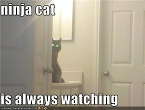 ninja cat  is always watching