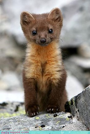 Stoat? Weasel? Adorbs?