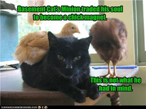 Basement Cat's Minion traded his soul to become a chick magnet.