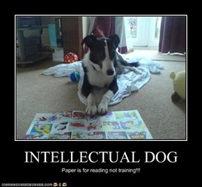 INTELLECTUAL DOG