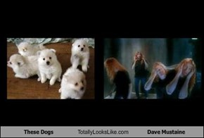 These Dogs Totally Looks Like Dave Mustaine