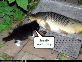 Sumpfin smellz fishy