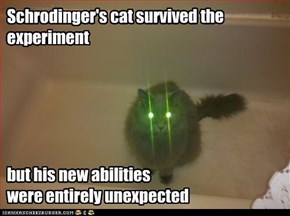 Schrodinger's cat survived the experiment