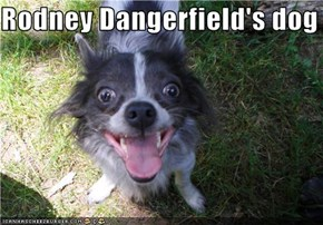 Rodney Dangerfield's dog