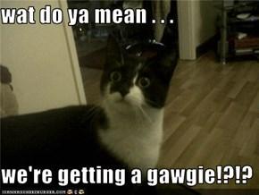 wat do ya mean . . .     we're getting a gawgie!?!?