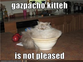 gazpacho kitteh  is not pleased