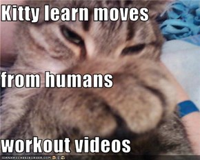 Kitty learn moves from humans workout videos