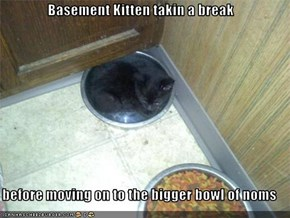 Basement Kitten takin a break  before moving on to the bigger bowl of noms