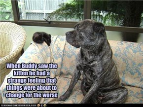 When Buddy saw the kitten he had a strange feeling that things were about to change for the worse