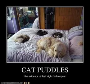 CAT PUDDLES