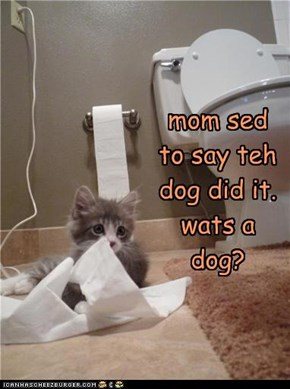 mom sed to say teh dog did it. wats a dog?
