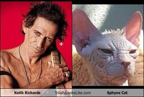 Keith Richards Totally Looks Like Sphynx Cat