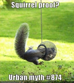 Squirrel proof?  Urban myth #874