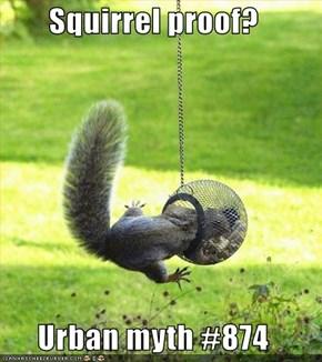 Squirrel proof?  Urban myth #874