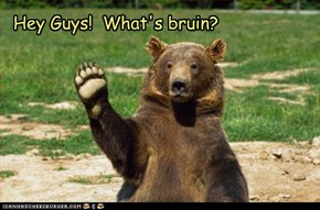 Hey Guys!  What's bruin?