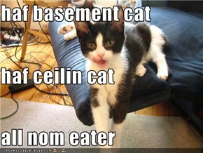 haf basement cat haf ceilin cat all nom eater