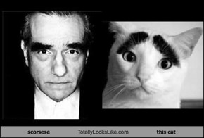 scorsese Totally Looks Like this cat