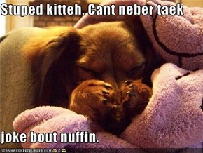 Stuped kitteh. Cant neber taek  joke bout nuffin.