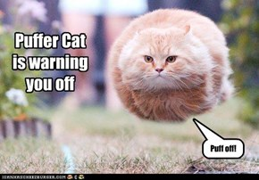 Puffer Cat is warning you off