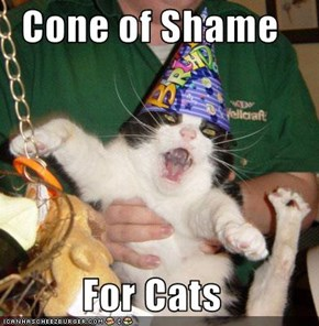 Cone of Shame  For Cats