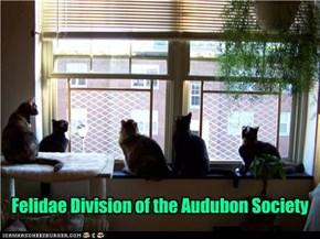Felidae Division of the Audubon Society