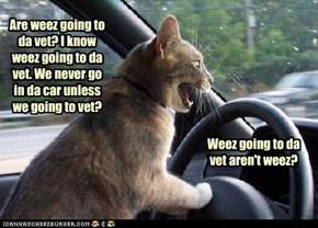 Paranoid Kitty