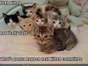 Itteh bitteh not really sure what's gonna happen next kitteh committee