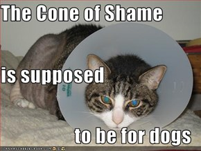 The Cone of Shame is supposed to be for dogs