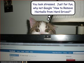 "You look stressed.  Just for fun, why not Google ""How to Remove Hairballs from Hard Drives?"""
