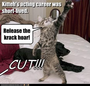 Kitteh's acting career was  short-lived.