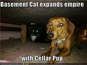 Basement Cat expands empire  with Cellar Pup