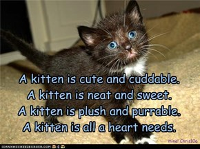 A kitten is cute and cuddable. A kitten is neat and sweet. A kitten is plush and purrable. A kitten is all a heart needs.