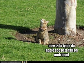 now iz da tyme da apple spose ta fall on meh head