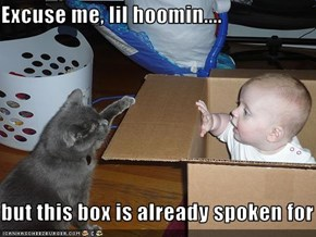 Excuse me, lil hoomin....  but this box is already spoken for