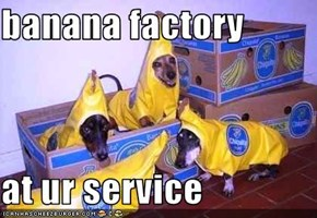 banana factory  at ur service