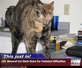 This just in! - Monorail Cat Shuts Down For Technical difficulties.